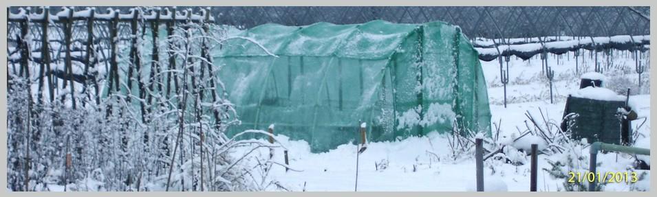 Winter Wonderwall